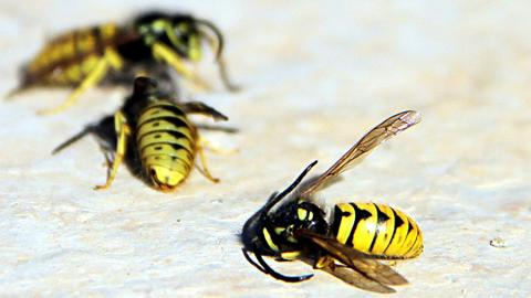 Climate change: A menace to wild bees