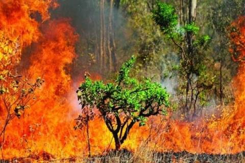 Large fire breaks out in northern Iranian biosphere reserve