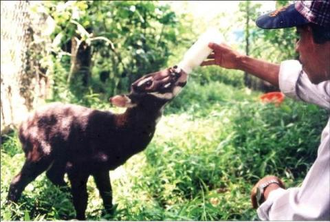 Vietnam's agriculture ministry, IUCN work to protect saola