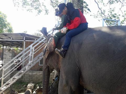 Vietnam: Bio-data chips implanted in tame elephants