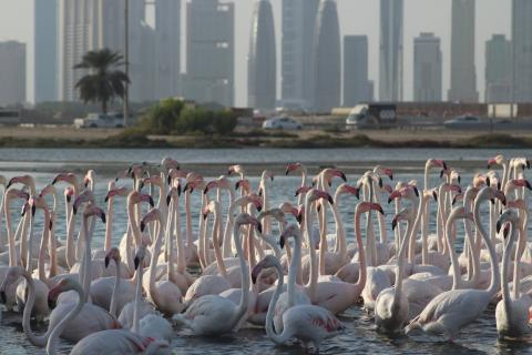 Discovery Channel's 'Wild Dubai' examines the diverse array of wildlife in Dubai