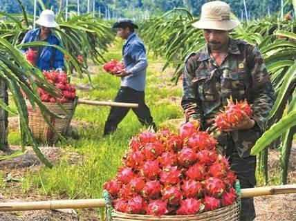 Vietnam: Air freight costs stymie fruit exports