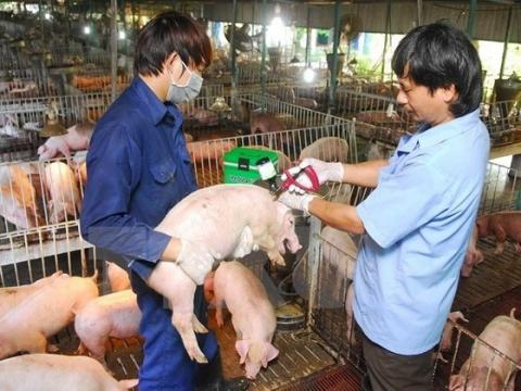 Vietnam: Measures urged to be taken to prevent African Swine Fever
