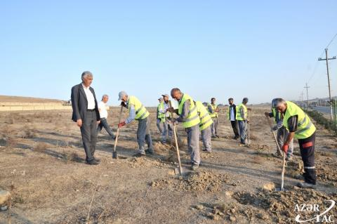 '20,000 trees to be planted in Absheron district in one day'