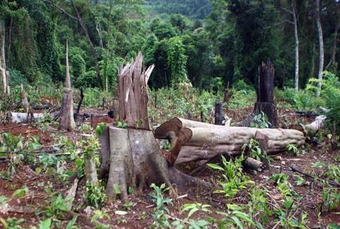 Vietnam: PM approves project to restore forests in Central Highlands