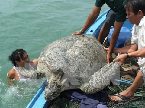 Vietnam's Con Dao National Park – nesting haven for sea turtles