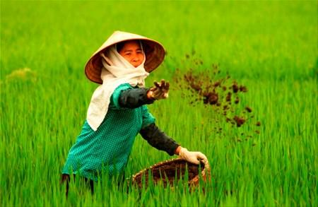 Vietnam wastes at least 1 billion USD yearly on over fertilisation