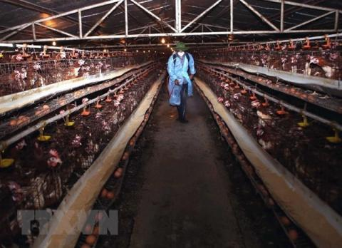 Vietnam's animal health agency warns of possible new bird flu outbreaks