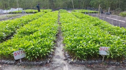 Vietnam province shifts to biodegradable seedling bags