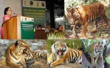 "1st Stocktaking Meeting To Review ""Global Tiger Recovery Program"" Underway In De"